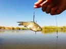 Приколы, неудачи, невероятные уловы и необычные случаи на рыбалке. № 19