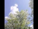 Белый цвет. Черемухи цвет 😉