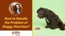 Как справиться с диареей у собаки / How to Handle the Problem of Doggy Diarrhea