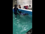 Блеку плавает