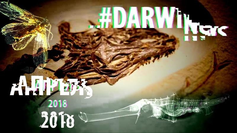 Четырехглазая ящерица цвет древних бабочек эволюция трубкорыла DARWINews 5 3