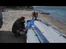 Аквилон Aquilon - надувная моторная лодка ПВХ с дном низкого давления НДНД 080