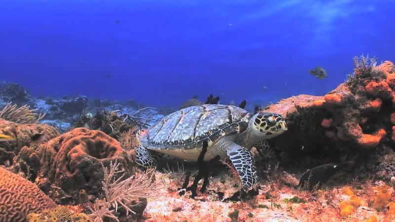 Подводный мир Косумель - BluScenes _Underwater Cozumel (2010)