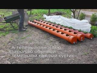Клубника, выращиваемая в трубах - rke,ybrf, dshfobdftvfz d nhe,f[ -