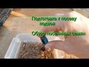 Подготовка к посеву подвоя. Обзор посеянных семян.