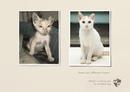 Социальная реклама должна шокировать. Реклама организации защиты животных: Тот же питомец…