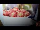 Äpfel Aquarell Präsentation Teil 2 von 4