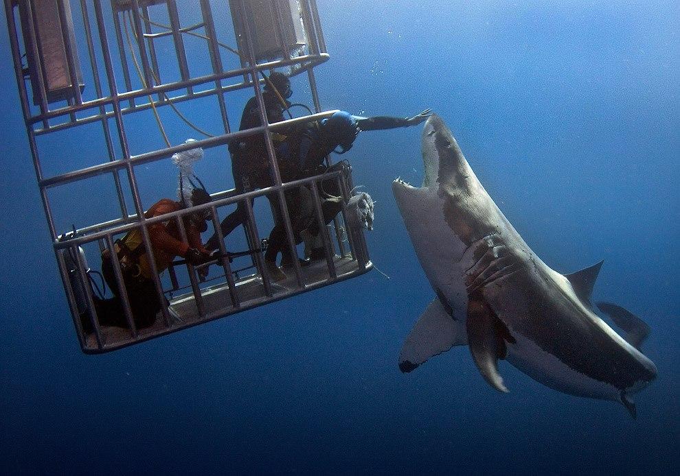 Игры белая акула