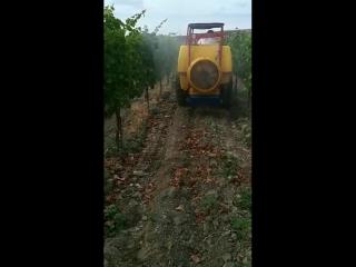 Испытание вентиляторного опрыскивателя Demorol покупателем на виноградниках