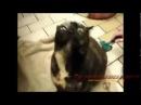 Говорящие животные много болтают, особенно коты и кошки