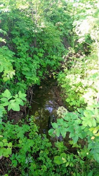 С утра сходили к ручью набрать воды и умыться.