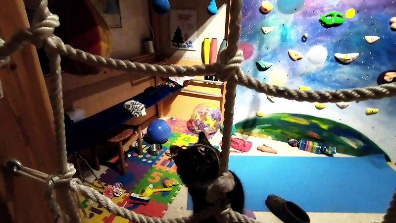 Кошка Файа лезет по сетке