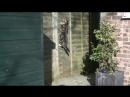 Комок шерсти совершает эпичный прыжок в слоумо