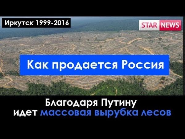 ИЗ ЗА Путина идет массовая вырубка лесов Иркутск Россия 2018