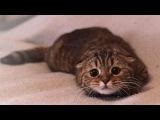 Пушистые и  виноватые - Подборка кошек застуканных на месте преступлений :)
