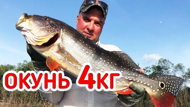 Он КЛЮНУЛ Окунь-СЛОН Адреналиновая Рыбалка в диких местах!
