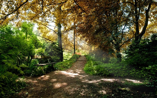 зодиак - Магия растений. Магические свойства растений. Обряды и ритуалы. Амулеты и талисманы из растений.  XBznA_PzE8A