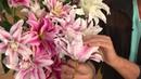 Roberta's 4 pc Quarter Century Quadrupled Oriental Lily Collection with Dan Wheeler