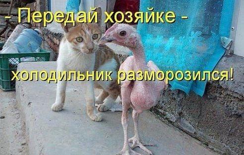 https://pp.vk.me/c7011/v7011983/1ca67/n-5z4JnPBZA.jpg