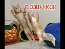 Приколы про котов от PSO и СМЕШНАЯ ОЗВУЧКА – смешные кошки 2018