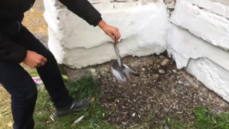 Dingogroup (3)Видео 18 Помогите опознать этого выродка. Не можем идентифицировать ни живодера, ни геолокацию. Будем писать в