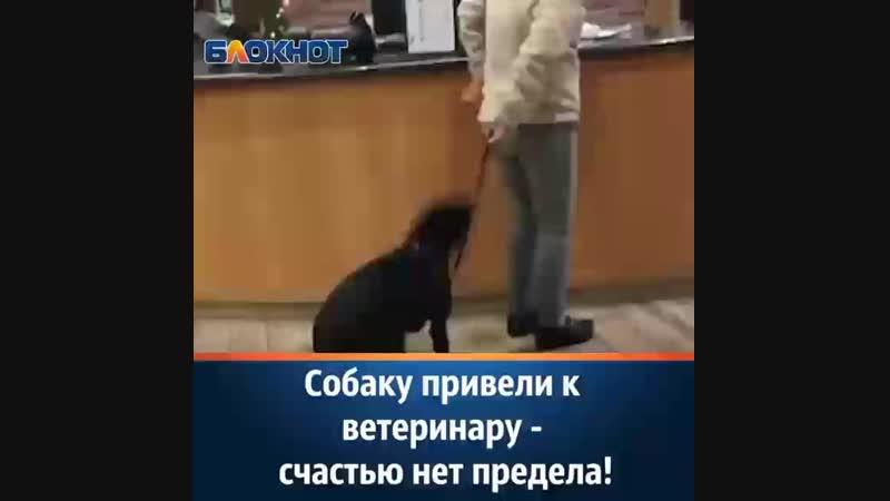 собаку привели к ветеринару счастью нет предела