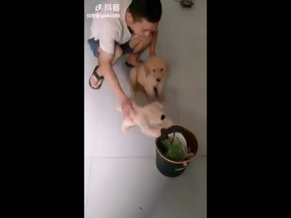 Como ensinar seu cão a não mexer no lixo kkkkkkkkk