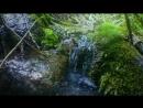 Речка в Грушевом лесу(приток р Грушевая)