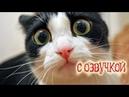 Приколы с котами и прикольная ОЗВУЧКА КОТОВ – Смешные коты и кошки – Приколы 2018 от Domi Show