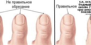 ногтей