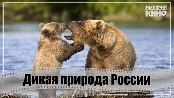 Совершите путешествие в самые отдаленные и неизведанные уголки России, поражающие богатством дикой природы.