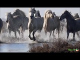 водолошади  horses water (Sepultura  Smoke On The Water Deep Purple Cover)
