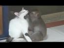 Обезьяна страстно обнимает кошку