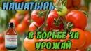 Нашатырный спирт Супер удобрение для хорошего урожая томатов Дачные советы