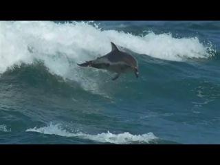 Красивая природа под удивительную музыку — смотреть онлайн видео, бесплатно!