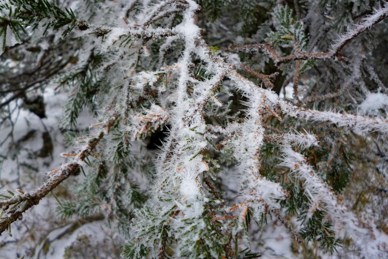 Высокая влажность+мороз=красивая изморозь. На всем! (23.06.2015)