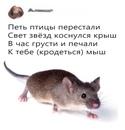 Наталия Бабурина фото #48