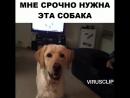 Хочу такую собаку