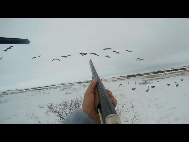 Охота на гуся в НАО весна 2017 Goose hunting
