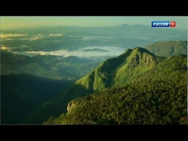 Экзотическая Шри Ланка Заоблачный лес