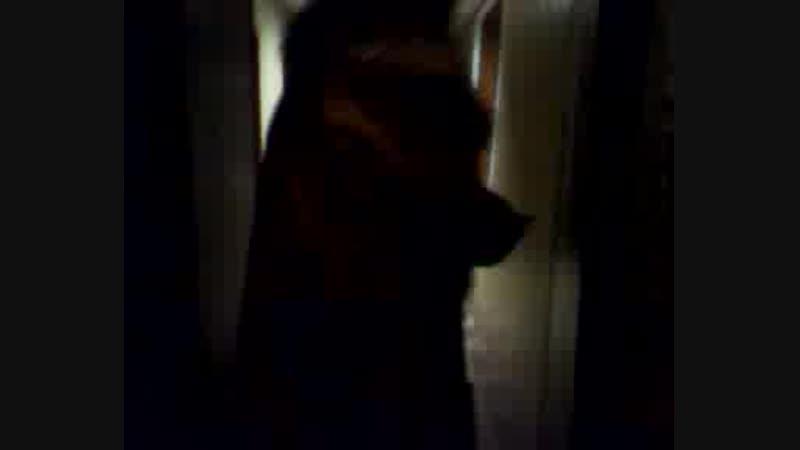 Video-2011-11-30-21-50-14.3gp