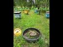 Поилка для пчел на нашей пасеке