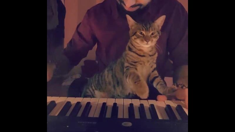 A feline music lover (sarper duman cat)