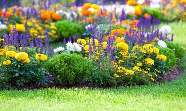 Цветы, которые будут радовать Вас все лето!