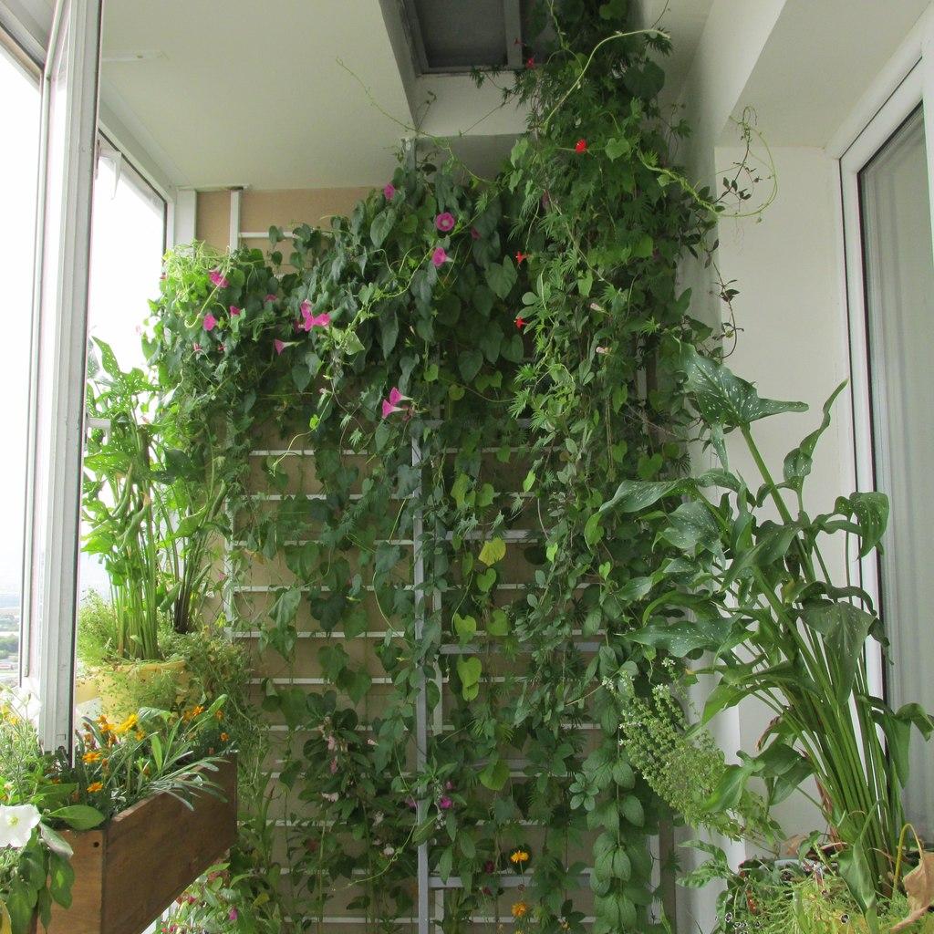 Какую зелень выращивать на балконе 42