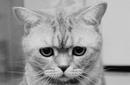 Бежит по улице растерянная кошка