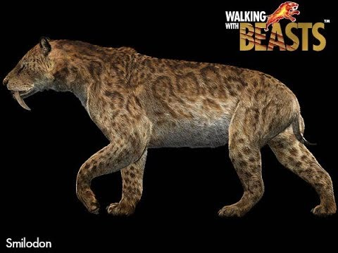 TRILOGY OF LIFE - Walking with Beasts - Saber-Toothed cat (Smilodon populator)