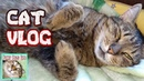 Cat Vlog. Baby petting a cat. Very affectionate cat. Cats sleep everywhere.