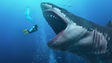 Did They Find a Living Megalodon In the Mariana Trench