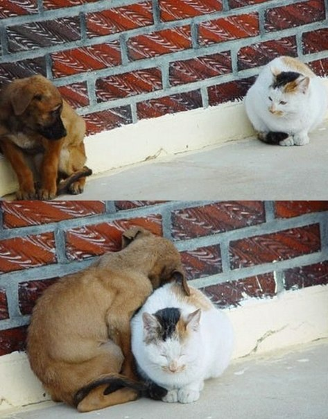Больше, чем фото: чему мы можем научиться у животных...